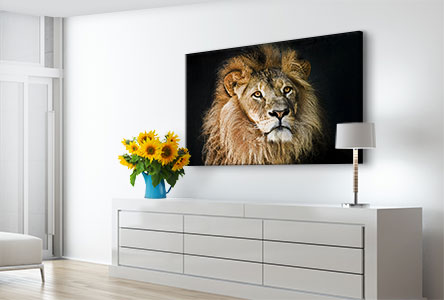 Woonruimte leeuwenportret foto op aluminium
